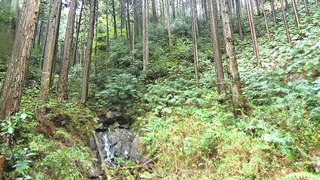 茨城の森林