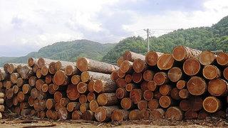 木材と森林
