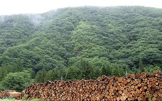上野村森林組合