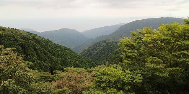 箱根の森林
