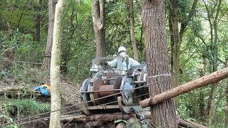 箱根の列状間伐見学