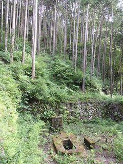 7月3日小田原再エネフィールドワーク