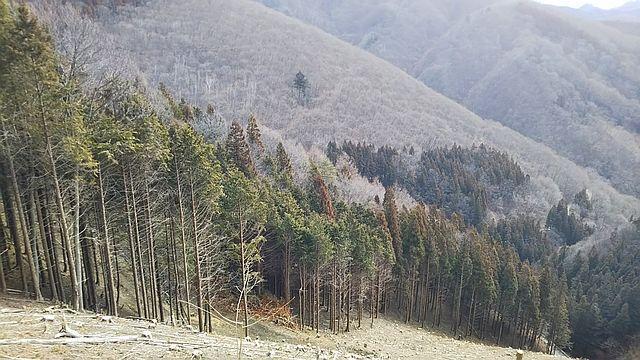 帯状間伐と作業道