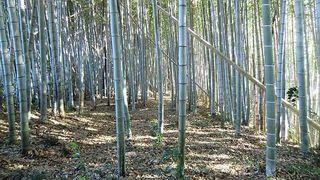 千葉県の竹林
