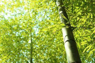 竹の生命力