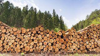土場の木材