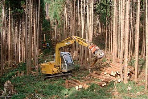 国有林の施業