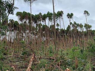 台風15号風倒木