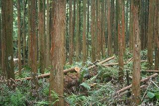 未利用の林地残材