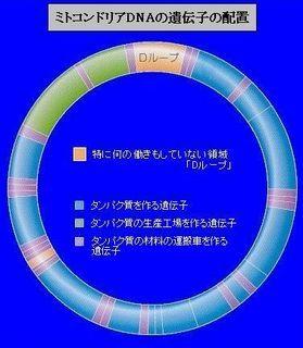 D-ru-pu2.jpg