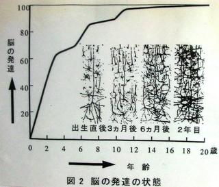 17  脳の発達曲線.JPG