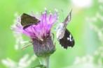 武蔵丘陵森林公園の自然を考える会さんの画像