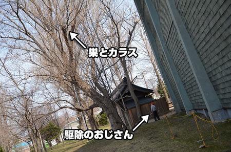 カラスの巣の駆除-函館市青年センター