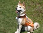 日本聴導犬推進協会さんの画像