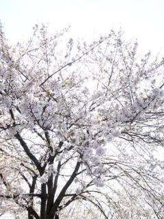 お花見④.jpg