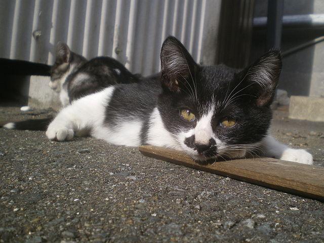 日光浴をする野良猫