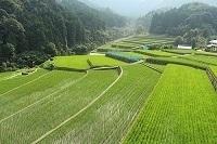 福岡県東峰村.jpg