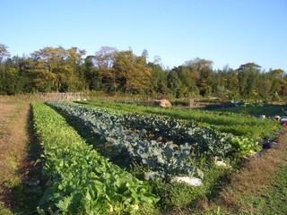 農園(中村).jpg