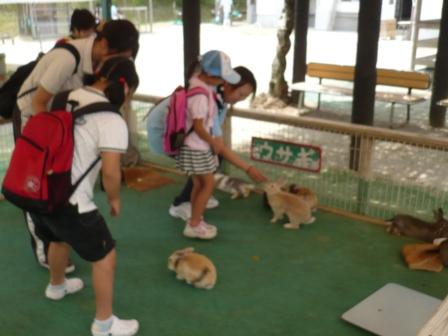 収容動物情報 東京都動物愛護相談センター 福祉 …