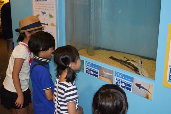 「くっつく海の生き物展」開催中
