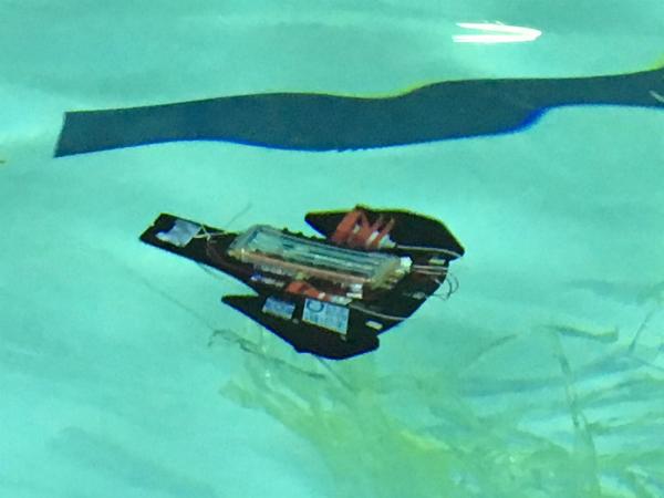 全国23チームが参加して水中ロボコン