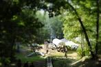 ニセウの森づくり運営委員会さんの画像