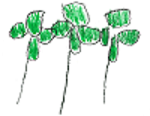 clover (1).png