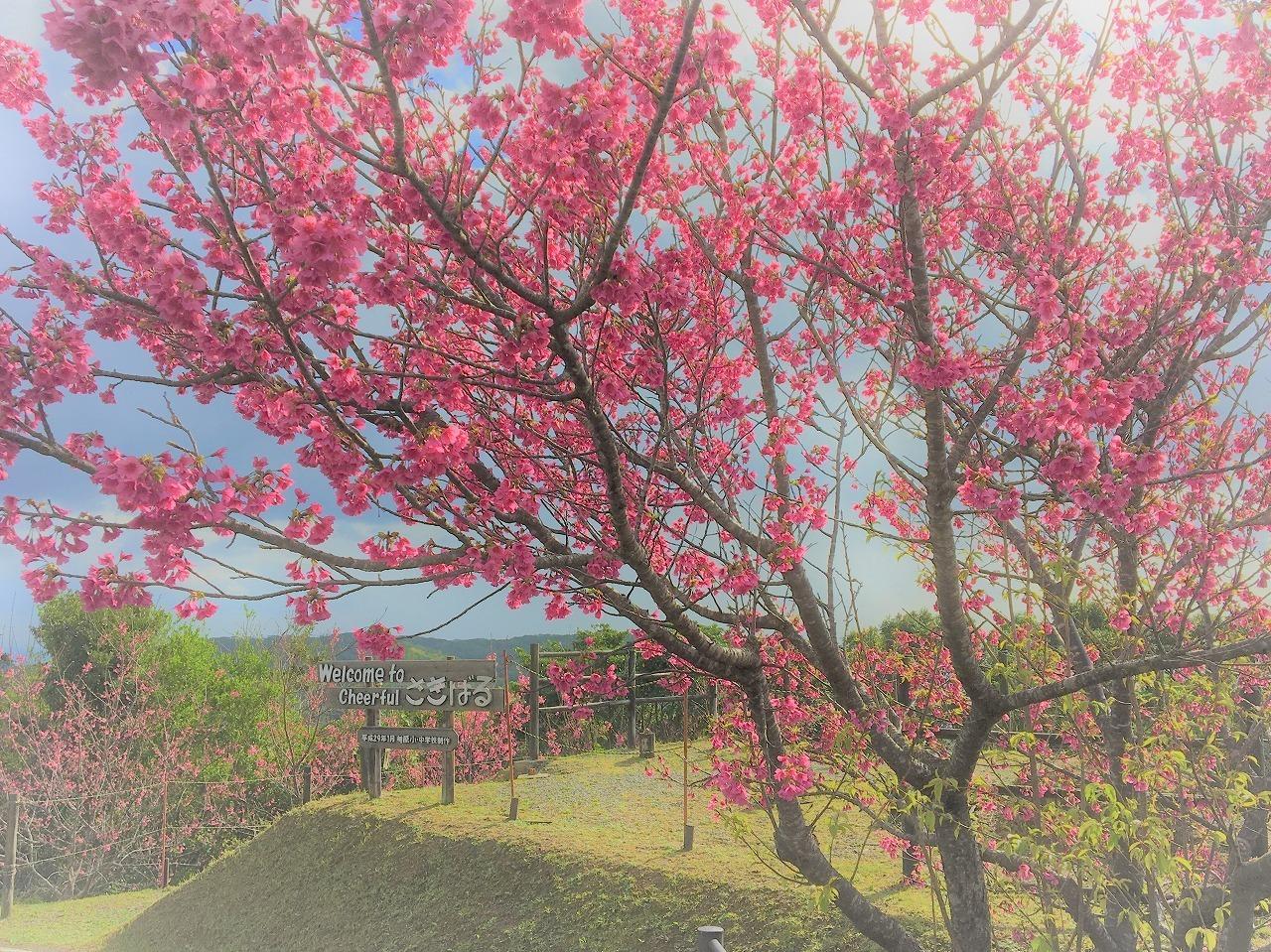 春の 候 向