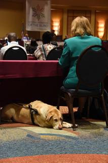 �G会場のあちこちで盲導犬を見かける.JPG