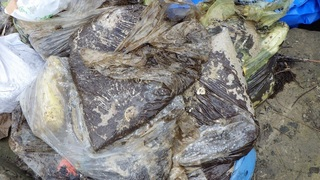 s1002 昨日レジ袋に回収された油:朝仁海岸.jpg