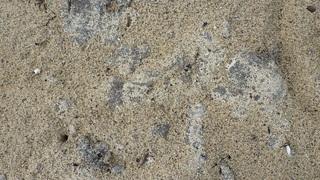 s1008 油が砂を被っていると大変見つけにくいです.jpg